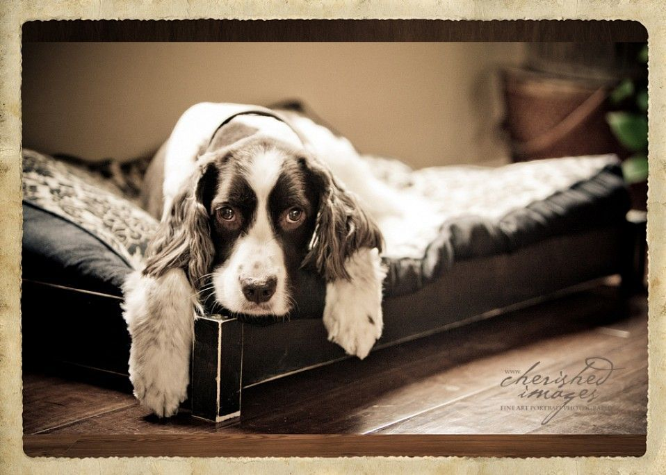 cherished-images-pet-photography-20